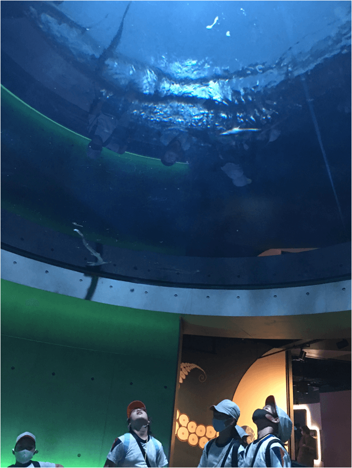"""コロナ禍を逆手に開業した次世代水族館、""""よそ者""""社長の夢は「四国全体のテーマパーク」"""