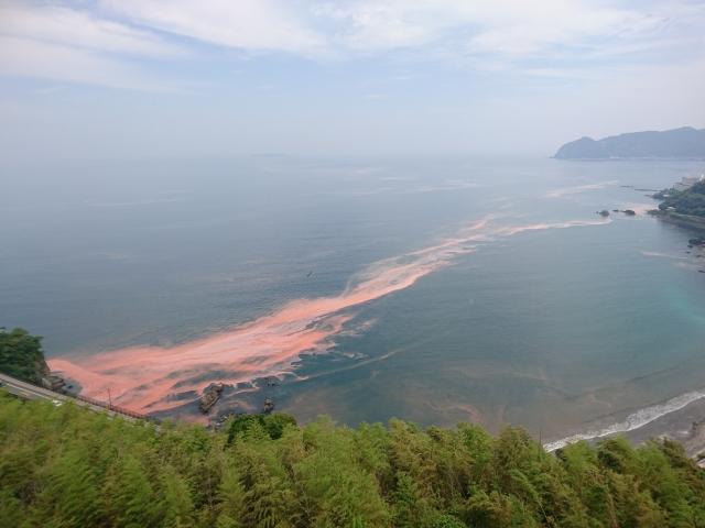 甚大な漁業被害もたらす「赤潮」、北大が横断観測に初成功の意義