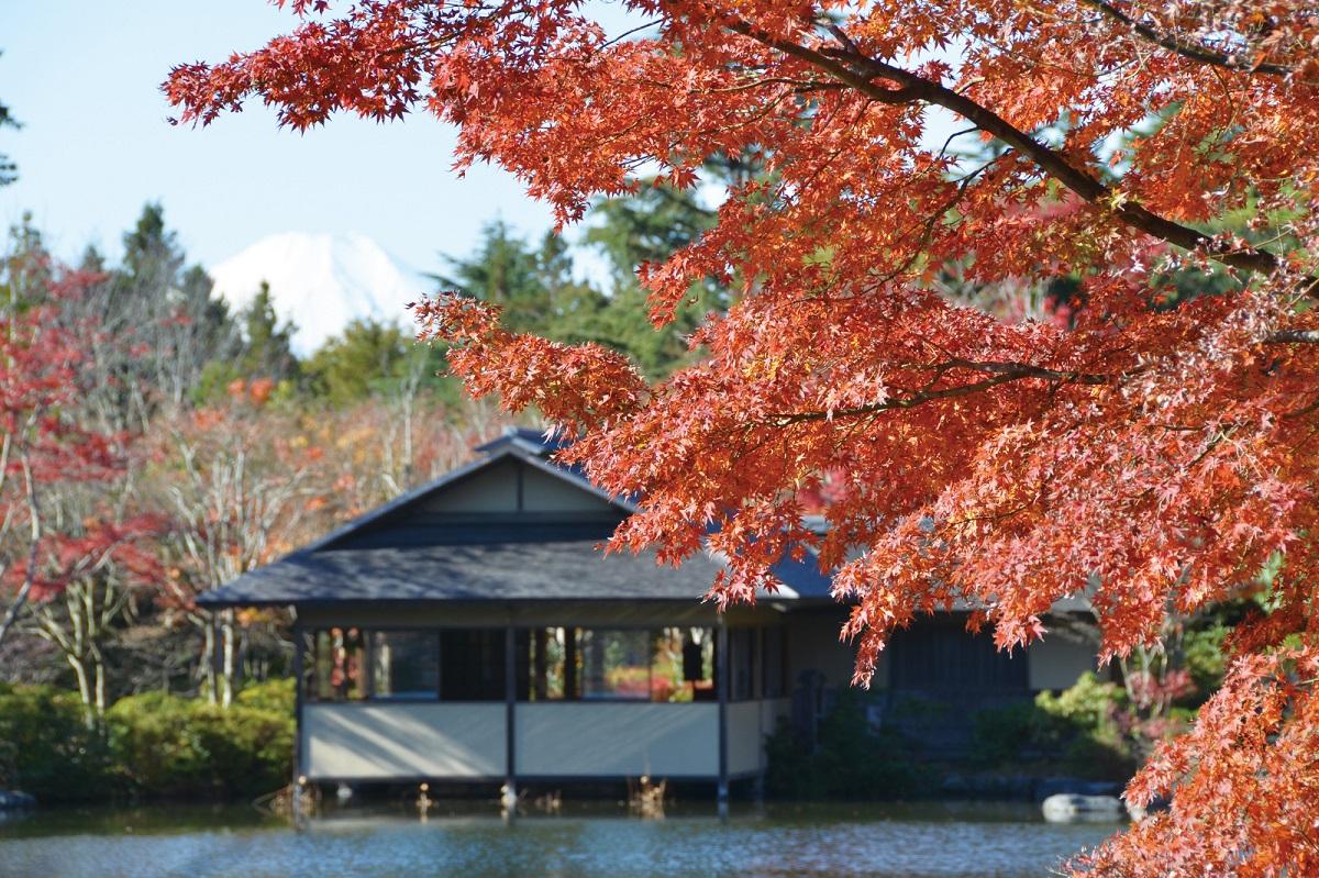 秋の行楽シーズン到来! 都内人気紅葉スポットを満喫しませんか