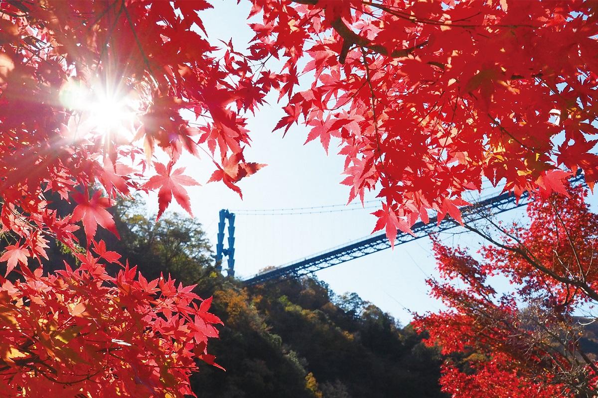 秋の行楽シーズン到来! マイクロツーリズムで季節を感じよう!