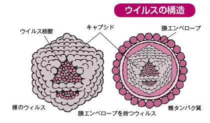 正体 コロナ ウイルス