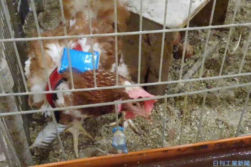 動物福祉の批判に応えるカギ握る「養鶏AI」。駆使した飼育に注目集まる