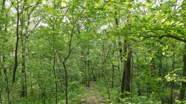大和ハウスがサプライヤーに「森林破壊ゼロ」求める。未着手は調達禁止も