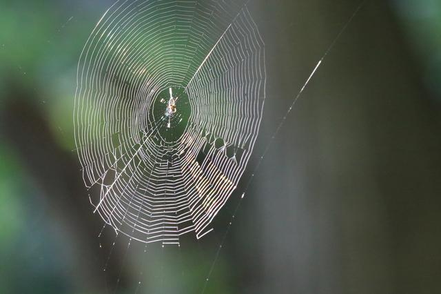 蜘蛛 の 糸