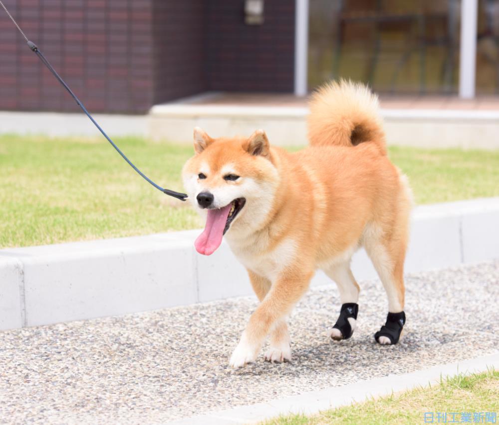 入ら が ない 犬 力 後ろ足