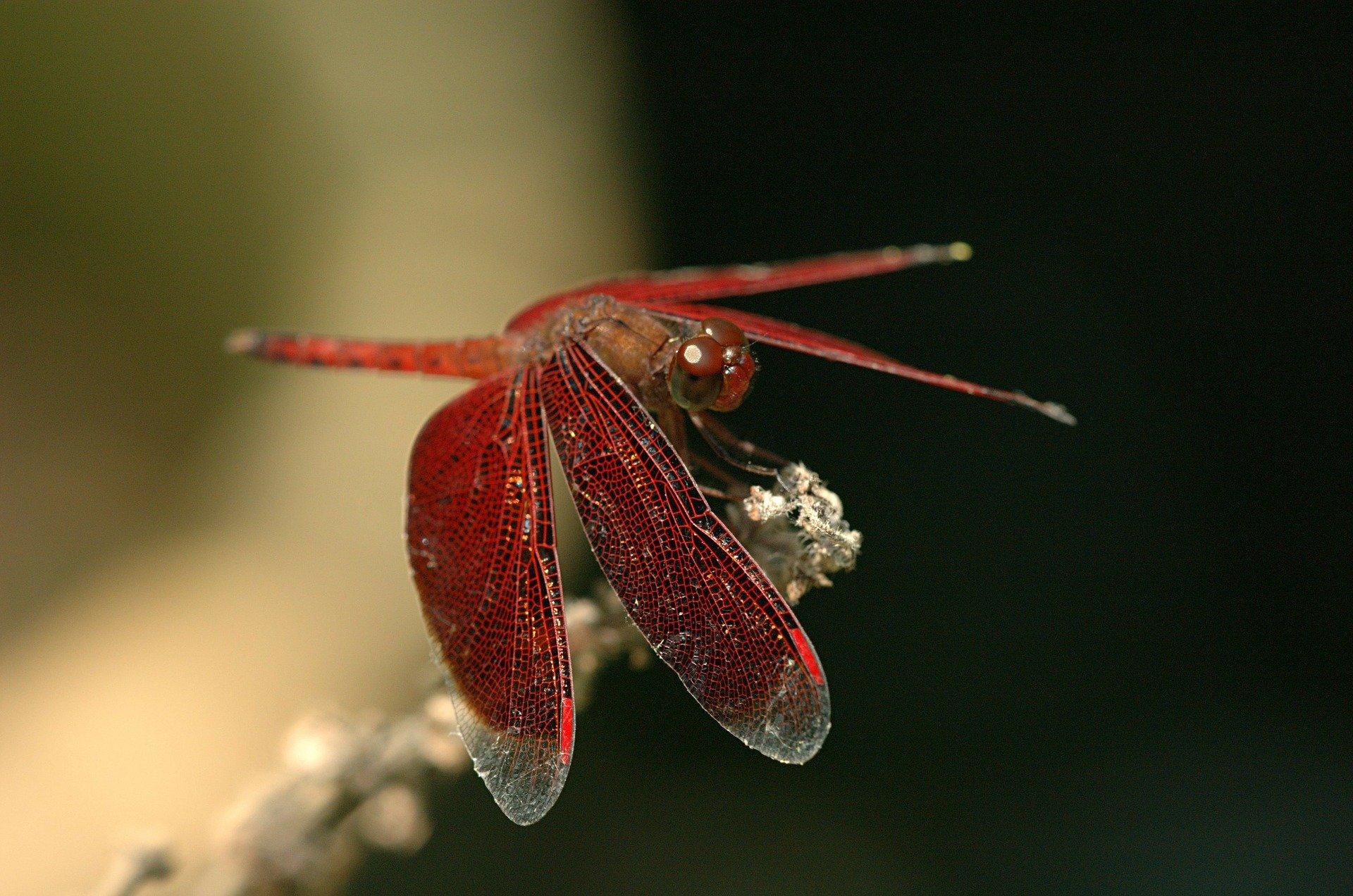 トンボの羽を再現した表面プロセス、抗ウイルスに効果。大ガス子会社が開発